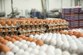 eggspallet